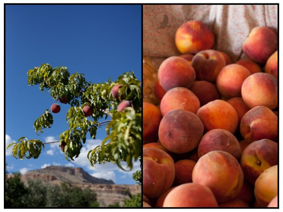 palisade colorado peaches produce farm