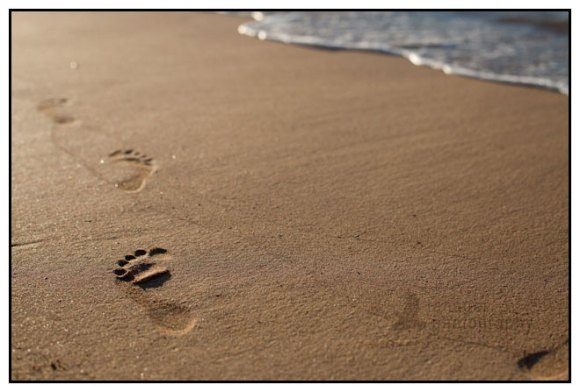 Footprints in the sand at Kalihiwai Beach, Kauai