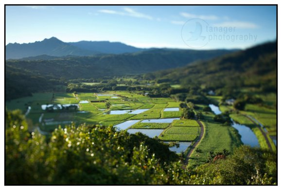 Hanalei Valley Lookout, Kauai, Hawaii (tilt-shift)
