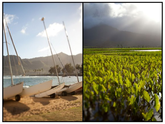 Kalapaki Beach and Hanalei Taro Fields, Kauai, Hawaii (tilt-shift)