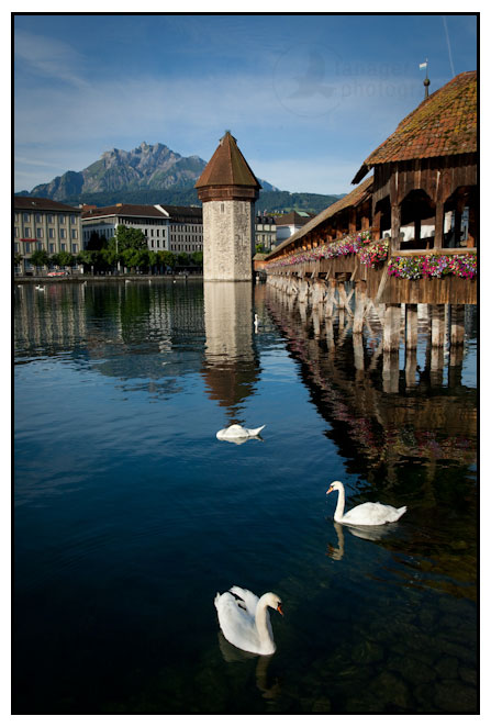 Swans and the Chapel Bridge, Lucerne, Switzerland