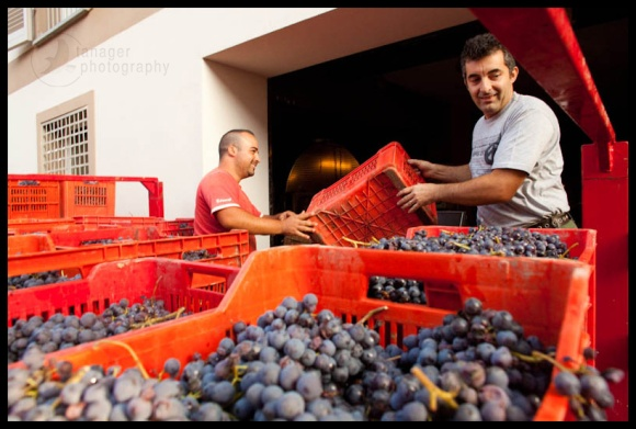 winemaking, Barolo, Italy