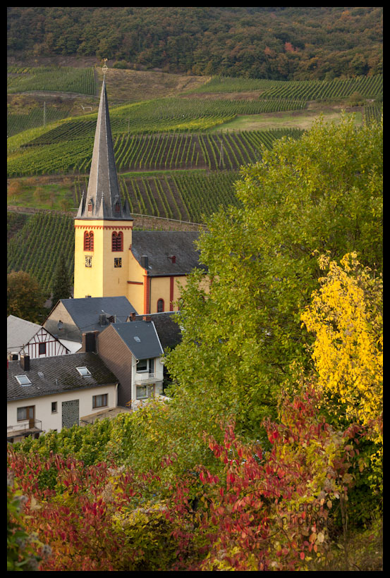 Church and vineyards, Senheim, Germany, Mosel River Valley